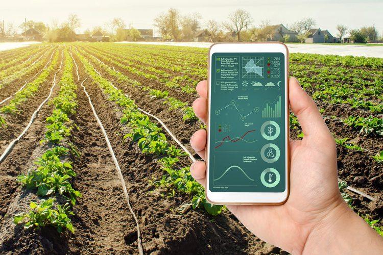 un agricultor supervisa su cosecha con un smartphone
